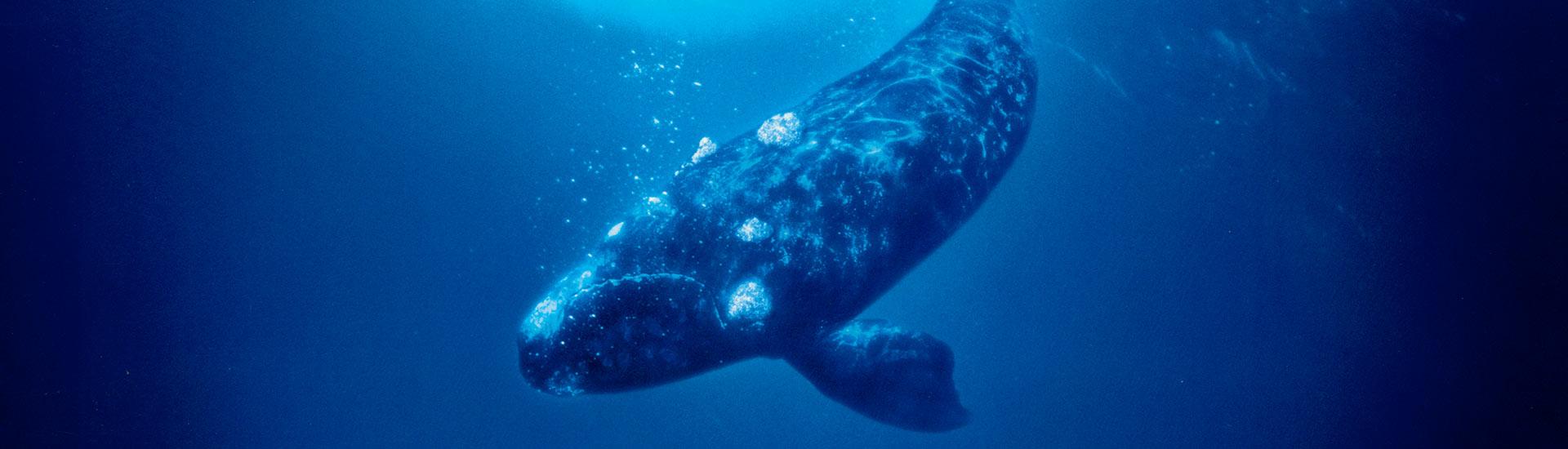 whale_rider_slide